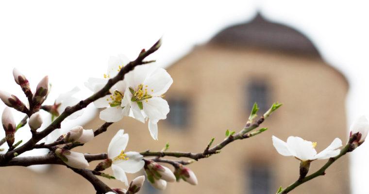 Gyümölcsös várkert – tudnivalók a jelentkezésről